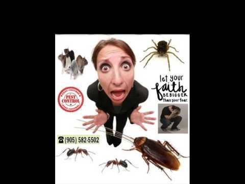 Are You Looking For A Local Rodent Control Expert? http://ift.tt/1eIZPl4 (905) 582 5502 or (289) 396 5426 effective residential & commercial mice & rats removal experts in your area.  Rodent control elimination involves discouraging infestations of mice and rats and also avoiding connection with the rodents. This includes removing all water shelter and food sources including the garbage inside and outside. This is done first by sealing holes around the home in order to avoid future invasion…