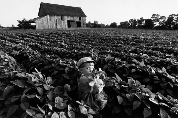 Larry Towell. CANADA. Lambton County, Ontario. 1993. Noah TOWELL and his pet cat in a field of soybeans in front of an abandoned barn in rural Ontario.