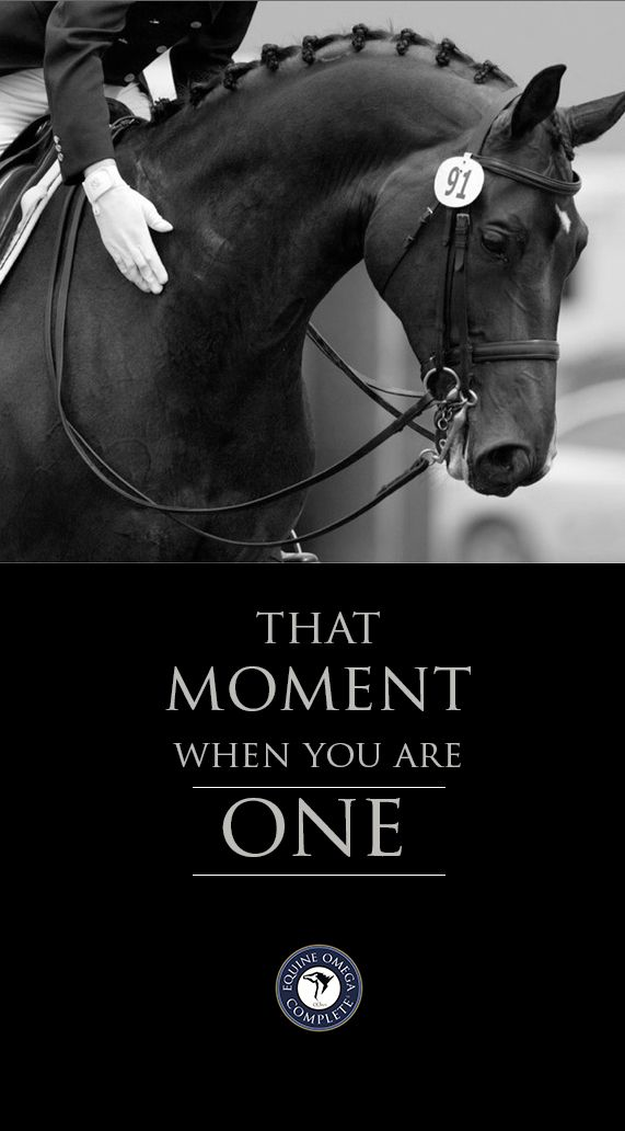 """Dressage riders. """"After using Omega supplements for my own health with great results I was excited to find a quality product to use on my horses. Joint health, gut health and a shiny coat are just some of the added benefits I have experienced while adding Equine Omega Complete to my horses diet. Don't be fooled, quality is the key to results when using omega products."""" Hope Glynn $59.95 Learn more. www.o3animalhealth.com"""