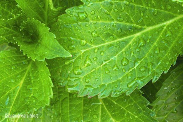 curare le piante con macerati vegetali