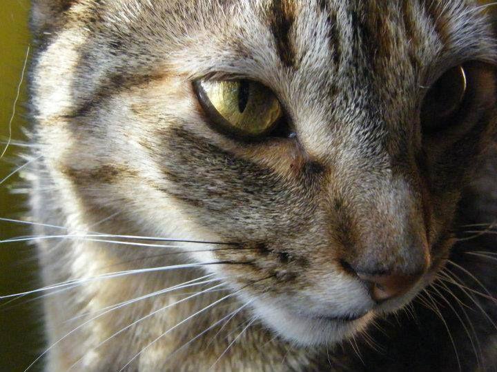 #gatos #cat