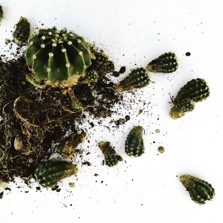 Propagating Cactus in 4 Easy Steps