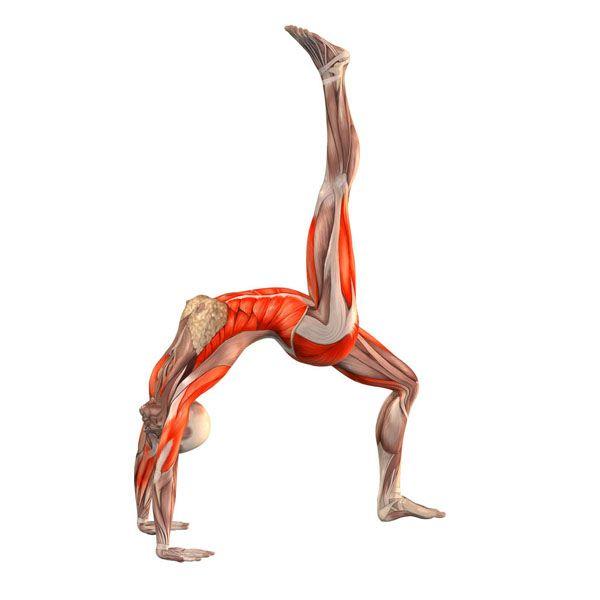 ૐ YOGA ૐ ૐ Ekopada Dhanurasana ૐ Postura del Puente con Pierna Derecha Arriba. Bridge pose with right leg up -  Yoga Poses | YOGA.com