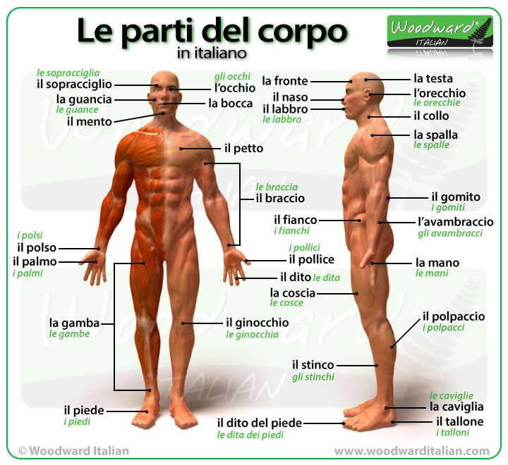 Le parti del corpo in italiano - Parts of the body in Italian