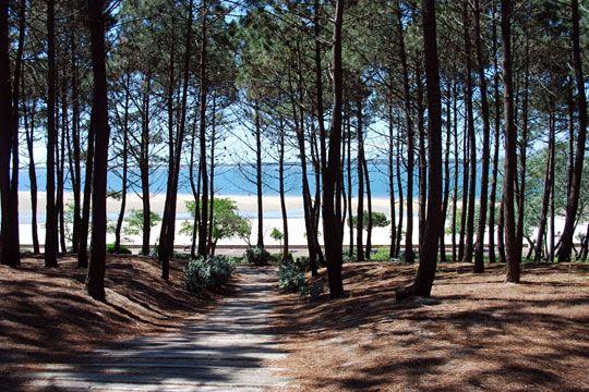 Le long de la côte d'argent, la forêt des Landes de Gascogne, principalement constituée de pins maritimes,abrite des arbres centenaires. Longtemps, le pin servait à la fabrication des cabanes, des bateaux, des caisses, tandis que l'exploitation de la résine, extraite par gemmage, fournissait du travail à un grand nombre d'artisans. Aujourd'hui la forêt est très prisée pour ses promenades nature.