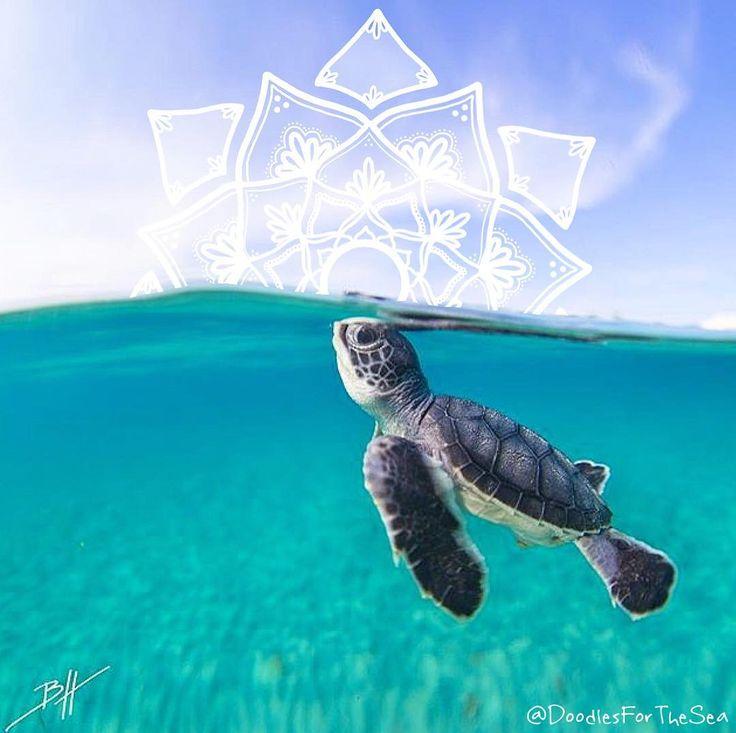 54 Best Sea Creatures Images On Pinterest