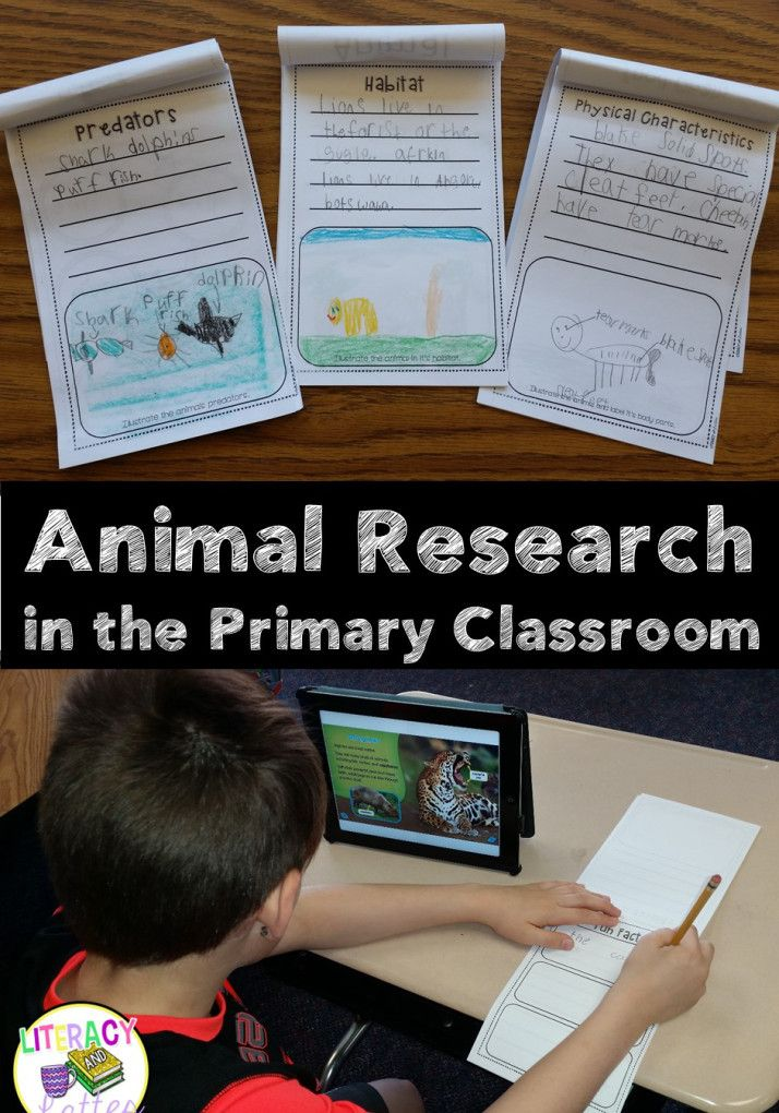 Student driven animal research made simple for kindergarten or first grade!