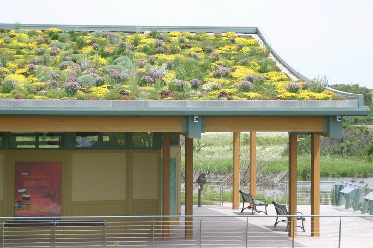 Little Prairie on the House on the Prairie, Tyner Nature Center, LEED Gold ~ Glenview, IL.  Products from Green Roof Solutions, Installed by Intrinsic Landscaping