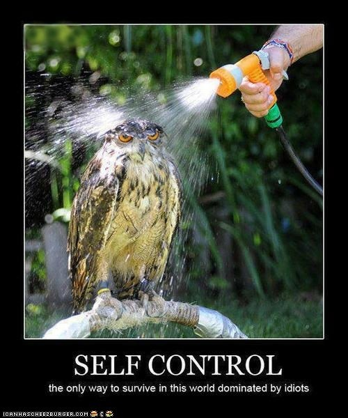"""As Buffy Summers Once Said, """"The Hardest Thing in This World is to Live in It""""Laugh, Funny Pictures, Funny Stuff, Humor, Funny Animal, Selfcontrol, Self Control, Owls, Bath Time"""