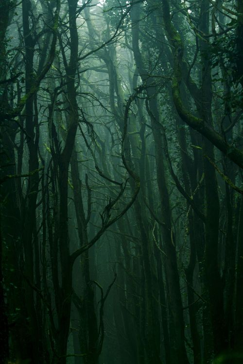 touchdisky:  Sintra montain | Portugal by Miguel Cardoso