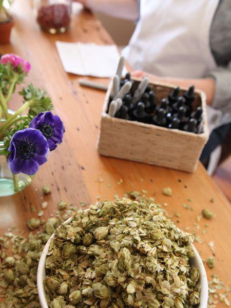 Herbal Academy Online Herbal Programs - Family Herbalist Path