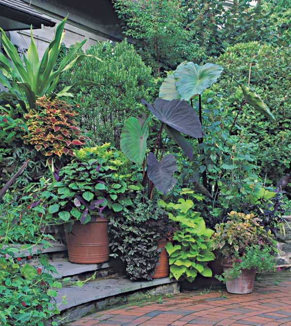 Top 7 ideas about container gardening on pinterest gardens window boxes and kale - Tropical container garden ...