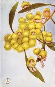 wattle gumnut babies by May Gibbs