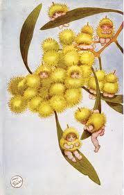 wattle gumnut babies by May Gibbs
