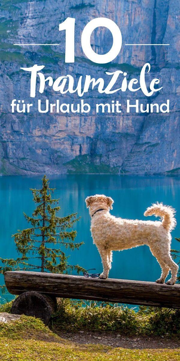 Urlaub Hund Deutschland Ostsee Bodensee Nordsee Ferienhaus