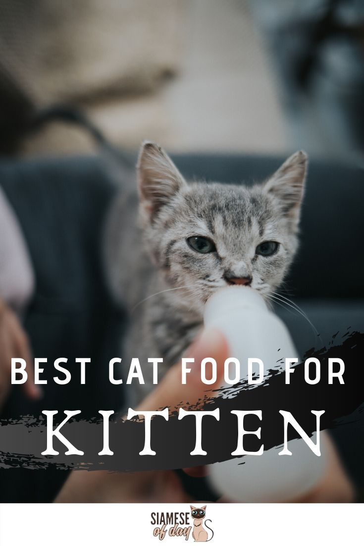 Best Cat Food For Siamese Cats Siamese Of Day Siamese Cats Cat Food Best Cat Food