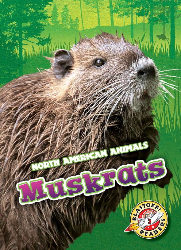 Muskrats are super swimmers! These semiaquatic rodents