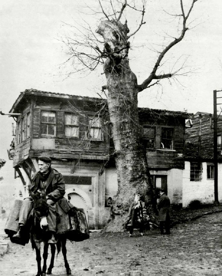 Eski   Sulukule  : Çınarlı Çeşme / 1950′ler