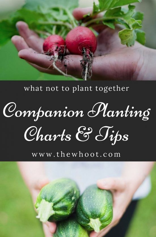 If you are looking for the best Companion Planting Chart and