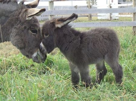 Little donkey with his mother :)