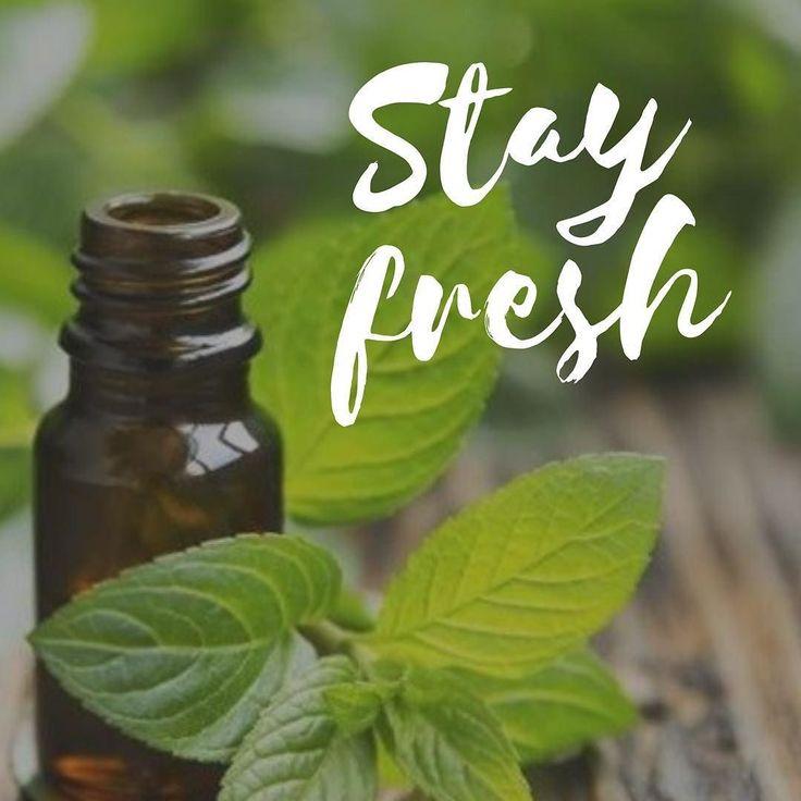 Æterisk olie Pebermynte. Økologisk 5 ml. 49kr. Uundværlig i dit personlige hus-apoteket.   Pebermynte virker: - Forfriskende - kølende - Letter træthed - Øger koncentrationen - Stimulerer sindet - God mod spændinger i hoved nakke og hals og optimal for en forfriskende massage efter sport. - Renser luftvejene ved hoste forkølelse m.m  Husk at du nu kan købe billetter til spændende foredrag om brugen af æteriske olier... billetter købes i shoppen!  #webshop #æteriskolie #pebermynte #uundværlig…