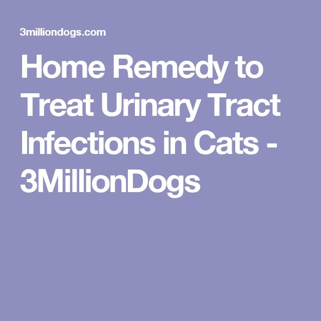Home Remedy To Treat Urinary Tract Infections In Cats 3milliondogs