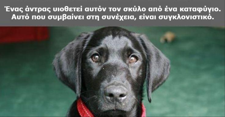 Ήθελε να επιστρέψει τον Σκύλο του στο Καταφύγιο όταν διάβασε το Γράμμα του Προηγούμενου Ιδιοκτήτη. Αυτό που έγραφε, άλλαξε τα Πάντα! Crazynews.gr