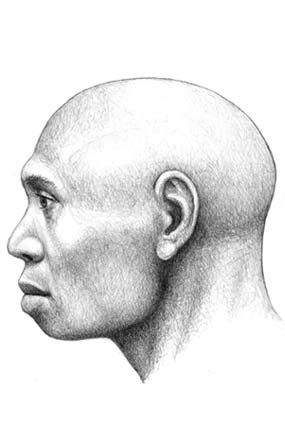 CVC. Atapuerca. «Homo antecessor»: father of all human species
