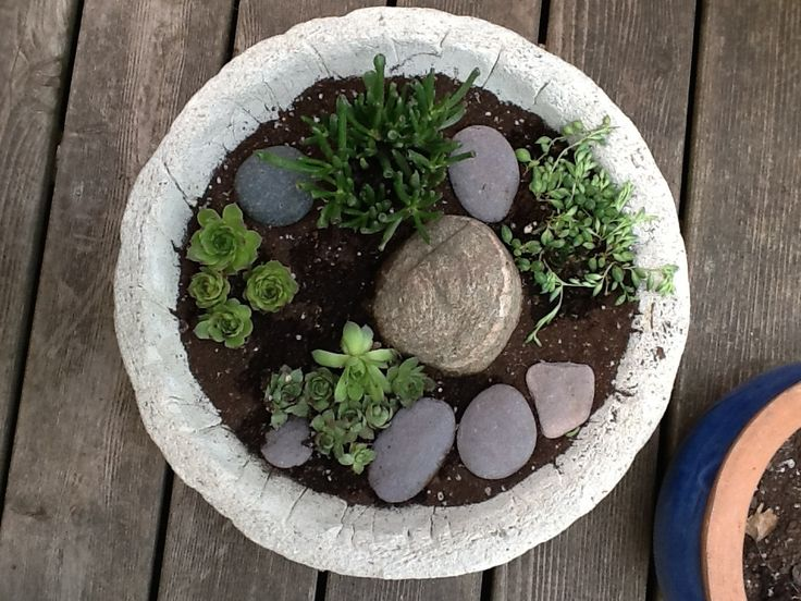 2015 - planted a first, small, portable succulent garden.
