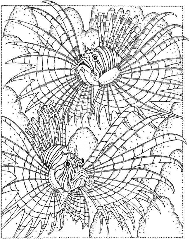 Lion Fish Coloring Page Youngandtae Com In 2020 Coloring Pages Adult Coloring Pages Fish Coloring Page