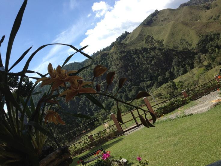 Orquídeas desde el valle de Cocora, Salento - Quindio