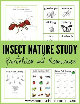 insects Flashcards and Study Sets | Quizlet