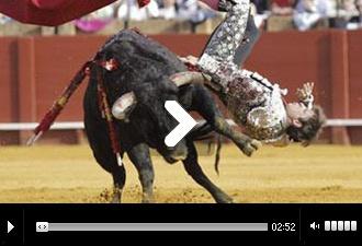SEVILLA Fue cogido de lleno por el primero El Juli, cornada grave en el cuádriceps femoral del muslo derecho - Mundotoro.com #toros #Sevilla #torero #cogida #fotos #videos