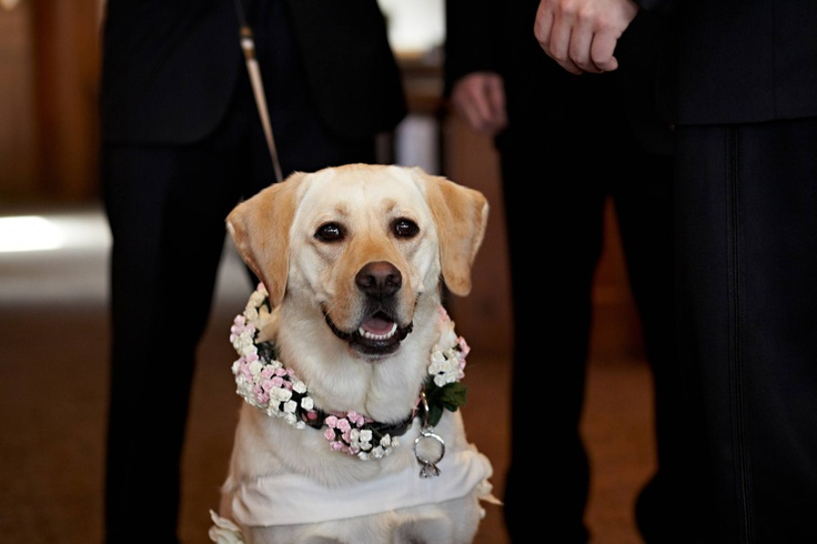 17 Best images about Dogs in Weddings on Pinterest | Dog ...