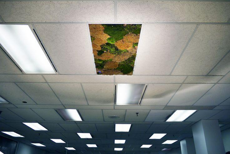 green_ceiling_01.jpg (4000×2672)