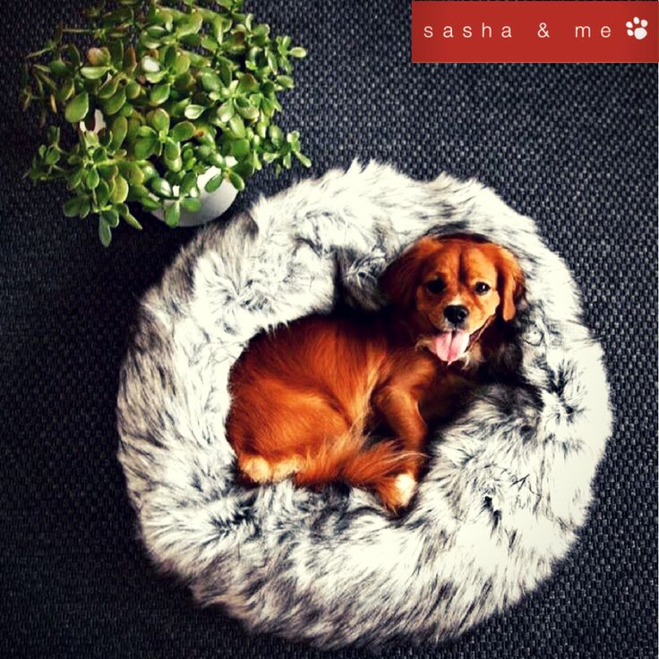 Dogs do speak but only to those who know how to listen #luxury dog beds australia, #designer dog beds, #luxury dog beds, #designer dog beds australia, #stylish dog beds, #designer dog accessories australia, #luxury pet beds, #designer dog bed, #best dog beds, #designer dog accessories, #boutique dog beds, #luxury dog bed, #trendy dog beds, #organic dog bed, #luxury dog beds online, #dog beds australia, #large luxury dog beds, #designer pet accessories, #dog pod beds, #dog accessories…