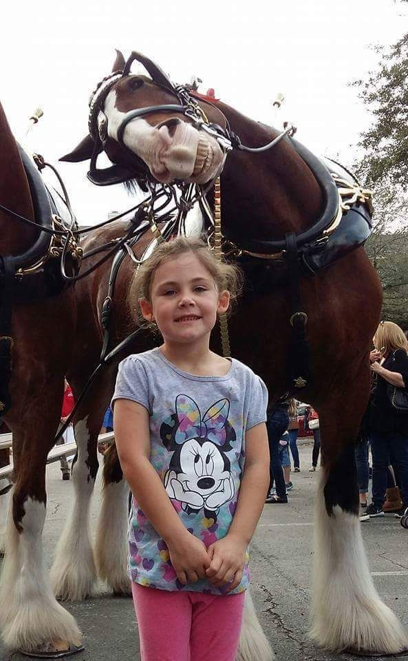 Adorable Little Girl Gets Photobombed By A Smiling And Happy Clydesdale