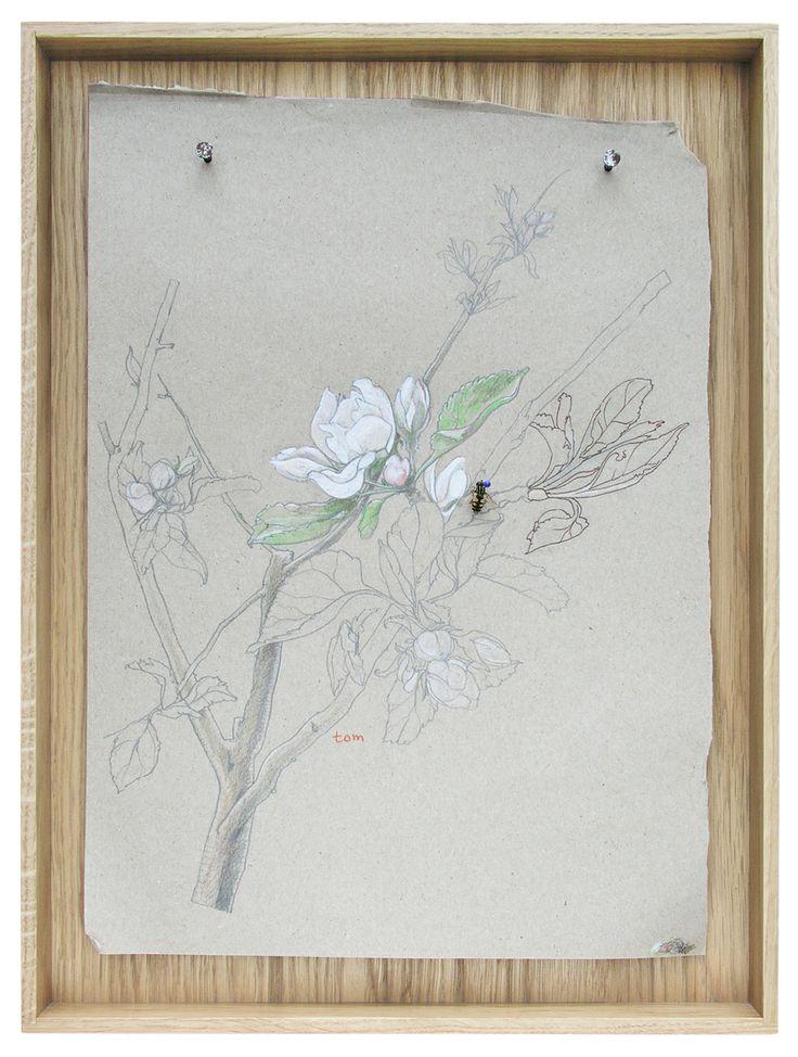 apple blossom  |  TOM FRENCKEN