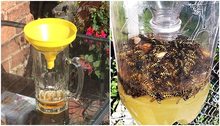 Így űzd el a szúnyogokat és a darazsakat! - Zöld Újság