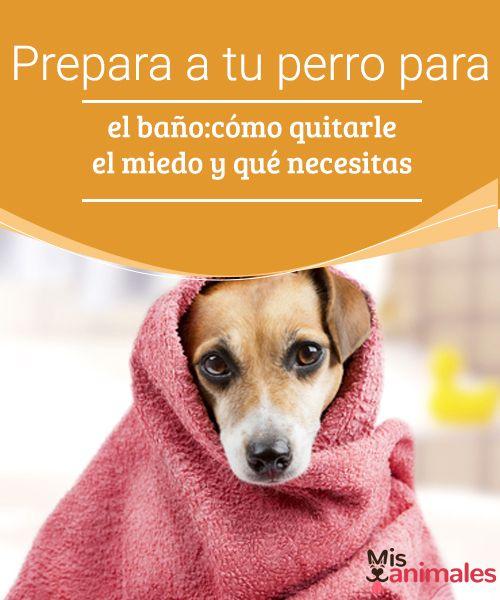 Prepara a tu perro para el baño: cómo quitarle el miedo ¿Tu perro está listo para el baño? ¿Sabes con qué frecuencia debes higienizarlo? En este artículo encuentra todas las respuestas.