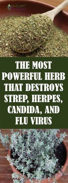 THE MOST POWERFUL HERB THAT DESTROYS STREP, HERPES, CANDIDA AND FLU VIRUS! #HealthandFitness
