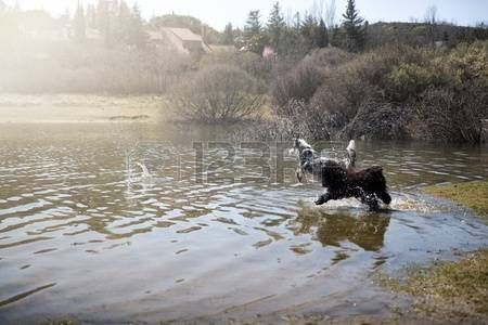 Adorable dogs enjoy running and bathing in the lake.