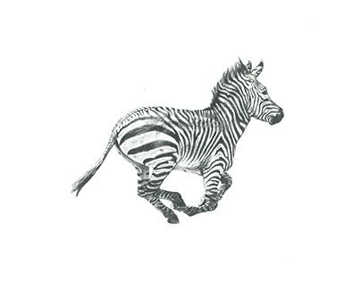 """Check out new work on my @Behance portfolio: """"Striped Horse"""" http://be.net/gallery/57648171/Striped-Horse"""