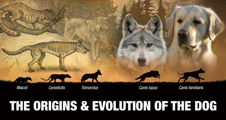 development of the relationship between early humans and canines