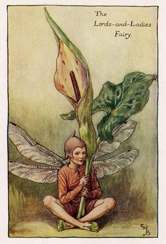 Lords-and-Ladies (lente) Flower Fairy Vintage Print, c.1927 Cicely Mary Barker-boekillustratie plaat