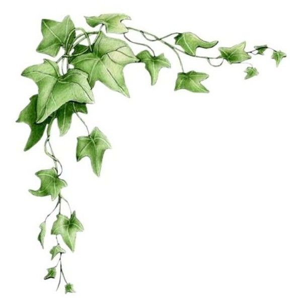 Pin od anna maj na My Polyvore Finds | Vine drawing, Vine ...