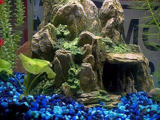 AQUARIUM SUPPLIES, ACCESSORIES AND EQUIPMENT: Tips to Choose the Right Aquarium Accessories for ...