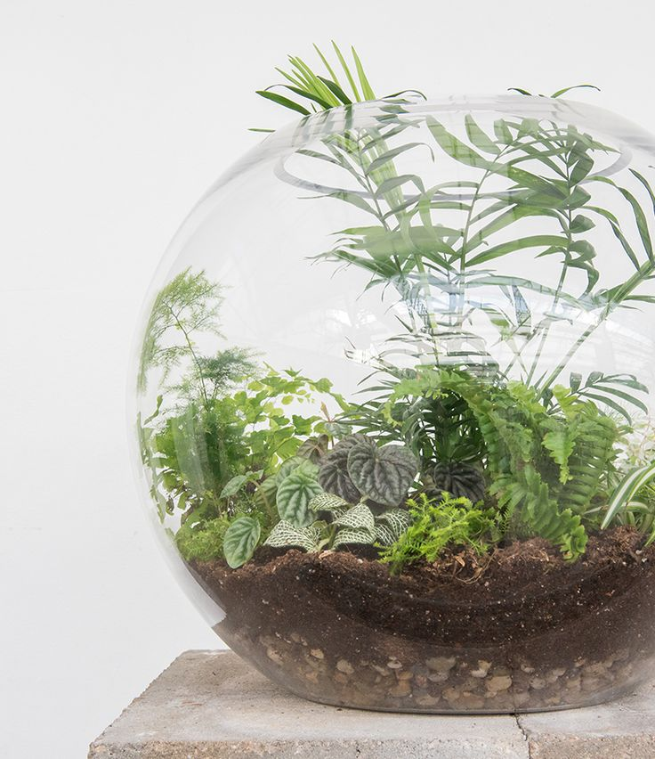 our new terrarium shop is open with everything you need → glassware, rocks, moss, charcoal, tons of baby plants, tiny gnomes •• head over to our blog for a few tips to get you started