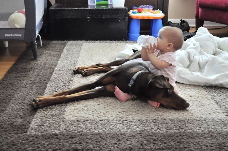 I remember it being like this with out first Doberman, Rita. She raised both my bother & I. True love.