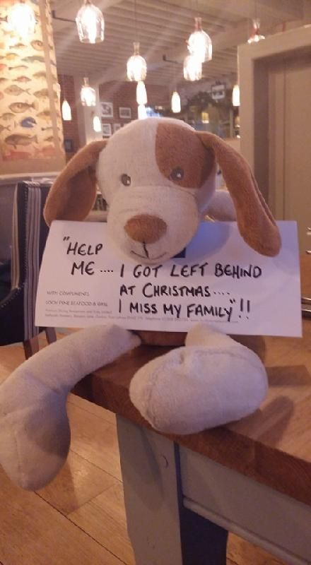 Found on 20 Dec. 2015 @ Loch fyne, Portsmouth . Twas the week before Christmas at Loch Fyne Portsmouth.... Please share and help me find my way home. They are looking after me very well here, but I miss my family!!x Visit: https://whiteboomerang.com/lostteddy/msg/buxoes (Posted by Loch Fyne Facebook on 30 Dec. 2015)